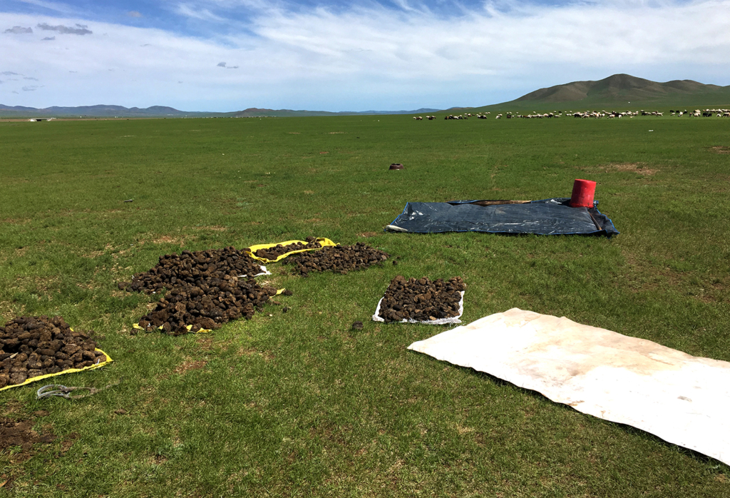 Horse dung being dried outside the ger. Photo by Sena Park